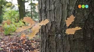 Herfst De natuur kleurt weer op zijn mooist/></a> </div> <div class=