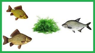 видео Ароматизаторы для рыбалки своими руками