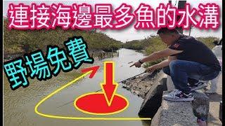 沒看過這麼多魚的水溝!!保證下竿一定有魚!破解秘密在這裡!!