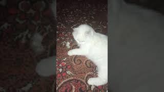 Кошка играет мышкой!