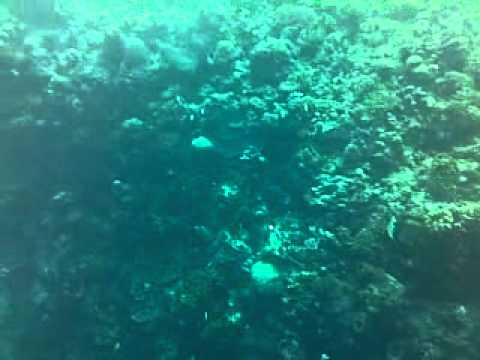 tour from netherland to bunaken island guide by winston lakoy PT IREINE TOURS AND TRAVEL