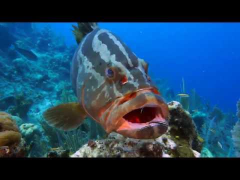 Underwater Symbiosis