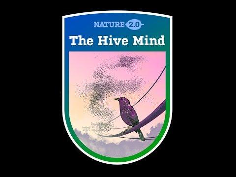 "(amsterdam) ""Hyve mind"" Nature 2.0 Meetup on blockchain/ai"