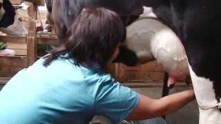 Как доят корову в Егорьевском районе на экоферме в деревне Рыжево