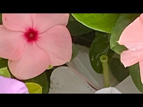 続き 2021/07/04 朝のご挨拶🅰️①静岡熱海市豪雨災害へのお見舞い②持続化給付金➡️一次支援金➡️月次支援金