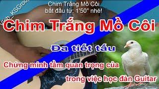 Chim Trắng Mồ Côi guitar bolero chachacha disco và slow