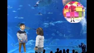 ラッスンゴレライkidsバージョン 沖縄水族館ちゅら海で子供がラッスンゴ...