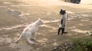 Коты шалят
