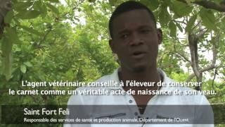 Pourquoi est-il important d'identifier les vaches en Haïti ?