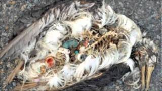 Great Pacific Garbage Patch.m4v