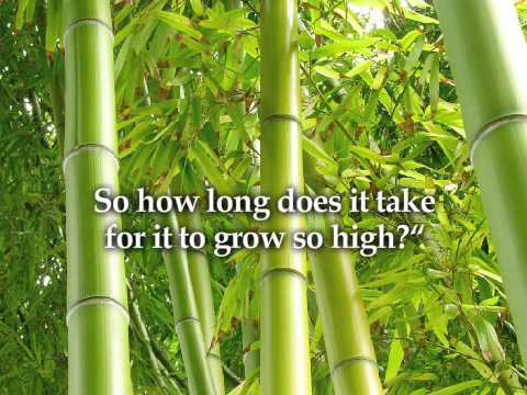 The Chinese Bamboo Youtube