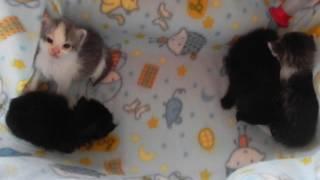 Котята-сиротки.Знакомтсво.