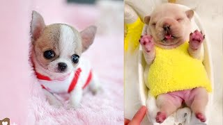 Baby Dogs - Cute and Funny Dog Videos Compilation #7   Aww Animals