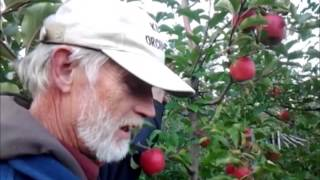 Pop's Perspective:  Apples - Fuji, Pink Lady And Goldrush