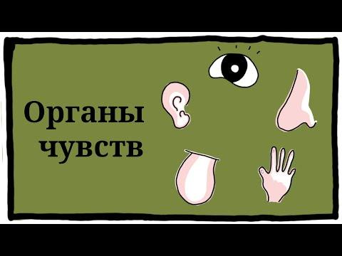 Видеоурок 3 класс органы чувств