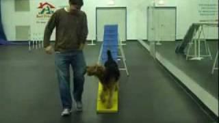 Chicago Agility Dog Training Dogwalk 2010.wmv