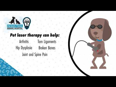 Do You Know The Benefits of Pet Laser Therapy?