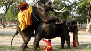 Elefantes copulando.MPG thumbnail