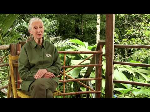 Jane Goodall Institute: Roots and Shoots Official Trailer