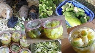Gurken einkochen   Gewürzgurken und süß eingelegter Salat   Rezepte