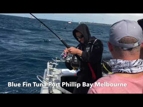 Reel Time Fishing Charters Melbourne Port Phillip Bay Southern Blue Fin Tuna Good Quality Version