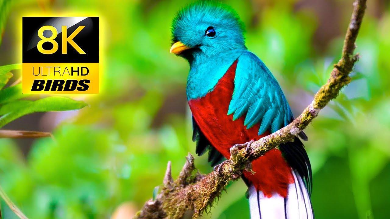 Most Beautiful Birds on Earth in 8K ULTRA HD / 8K TV