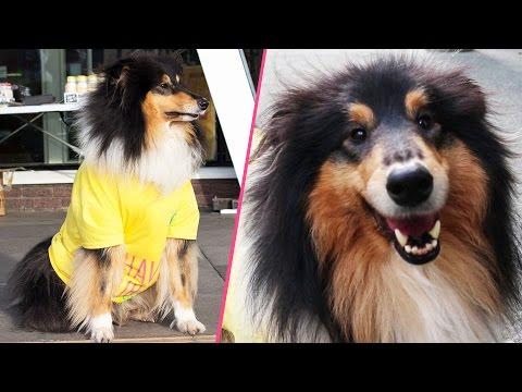 Dog Cam Elections 2017   NSU/TV