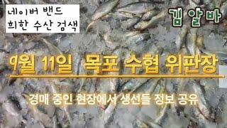 9월 11일 목포 수협 위판장 경매 소식과 생선 매입 …