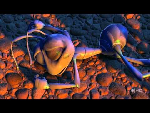 النمل مش خدامين عند الجراد