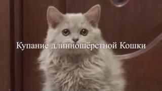 Как искупать кошку. Как помыть кошку. Уход за длинной шерстью
