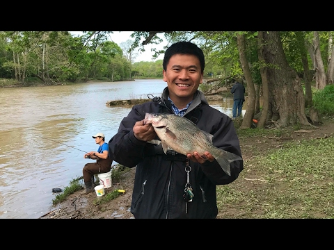 Fish The Metropark Episode 1 Side Cut Metropark White Perch White Bass Fishing