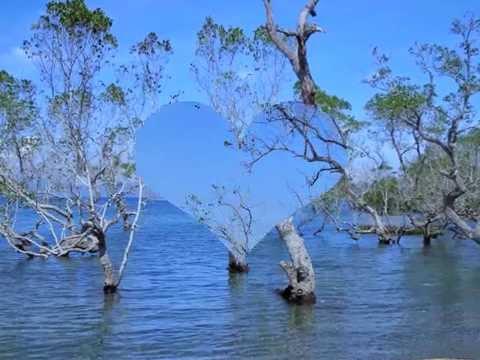 PULIDO NEST BEACH RESORT: MAGNAGA PANTUKAN COMPOSTELLA VALLEY