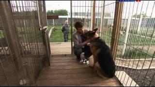 Лорд. Пёс-полицейский: сезон 1, серия 2