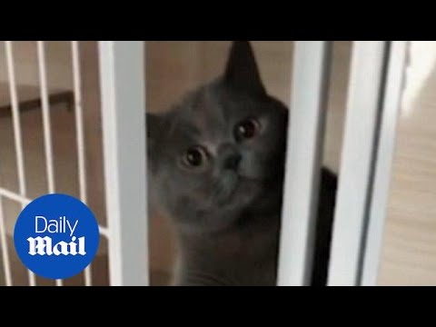 Cat caught breaking out of its cage and decides to put itself back in - Daily Mail