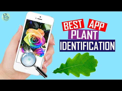 INSTANT PLANT IDENTIFICATION APP – BEST APP TEST AND REVIEW