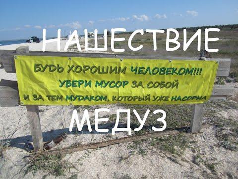 Нашествие медуз в Щелкино (Крым)
