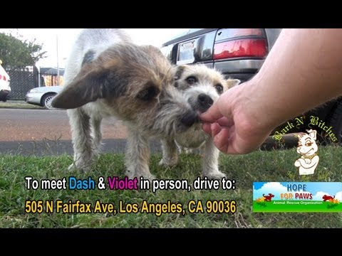 Rescuing two dogs, a brother and a sister from life on the streets.  Please share.