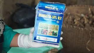 Groundnut seed treatment