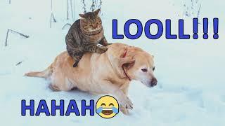 KATTENS BEDSTE VENN!!! HAHA FUNNY CAT AND DOG