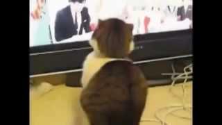 Приколы с Котами - Подборка видео подряд