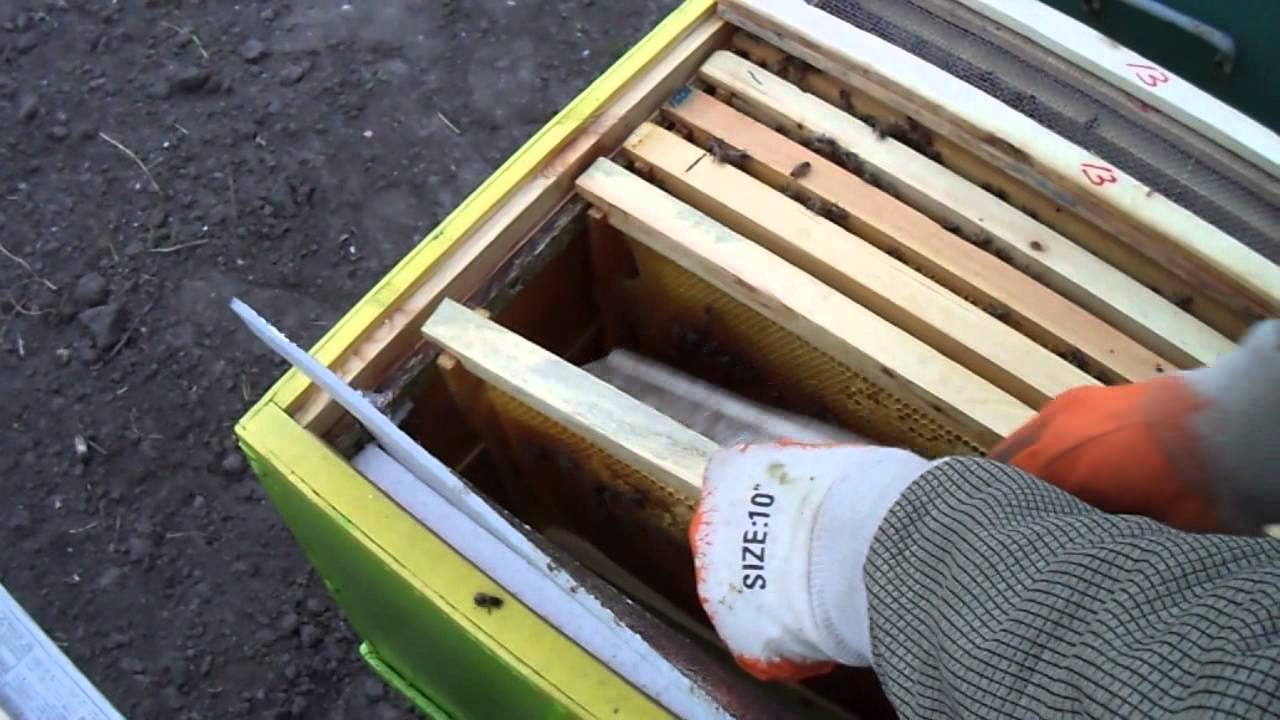 Ссаживаем две пчелосемьи ( Одна семья вышла с земы без матки)