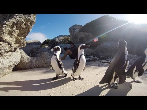 CAPE TOWN: 'Street Life, Sharks, Backpacking and More!'