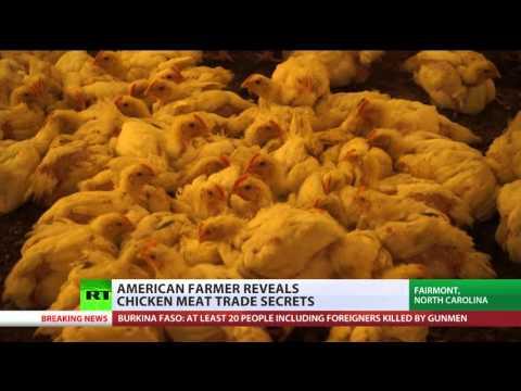 Ruffling Feathers: Farmers reveal secrets of chicken meat trade in America