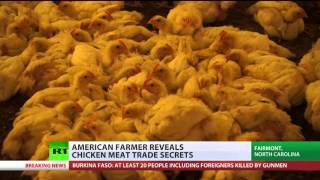 Ruffling Feathers: Farmers reveal secrets of chicken meat trade in America