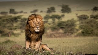 Masai Mara and Olare Motorogi Conservancy with Gamewatchers Safaris HD