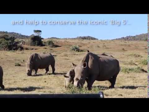 "Volunteer On The Kariega ""Big 5"" Conservation Project in South Africa!"