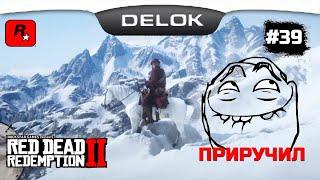 САМАЯ ДОРОГАЯ ЛОШАДЬ В ИГРЕ БЕСПЛАТНО!!! Часть 3 ПРИРУЧИЛ ¤ Прохождение Red Dead Redemption 2 #39