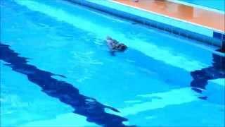 ノーフォークテリア、リロの兄弟(同胎)犬のスマイルくんは泳ぎが上手...