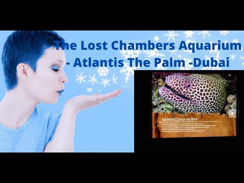 "The Lost Chambers Aquarium – Hotel Atlantis ""The Palm"""