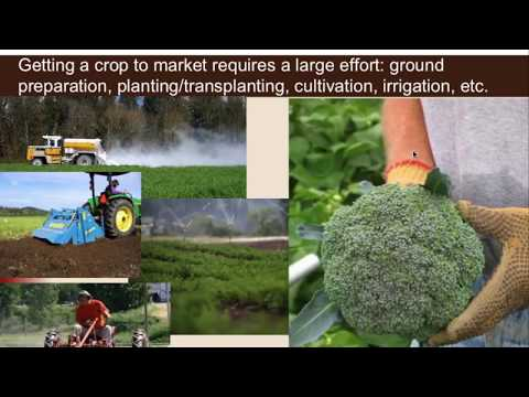 Optimizing Nitrogen Management on Organic and Biologically-Intensive Farms